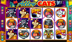alley cats latest microgaming pokie